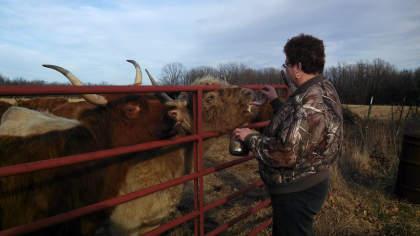 scottish-highland-cattle- (16)