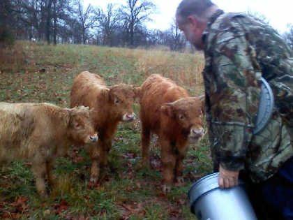 scottish-highland-cattle- (4)