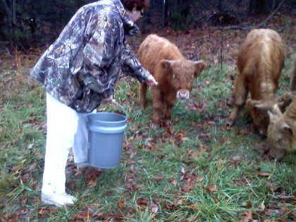 scottish-highland-cattle- (5)